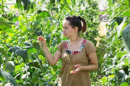 Jardinero de sexo femenino confiado que controla las plantas mientras que cultiva un huerto en invernadero