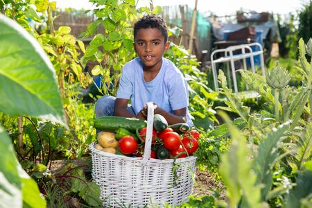 Teenager boy with harvest of tomatoes, cucumbers and parsley from the garden
