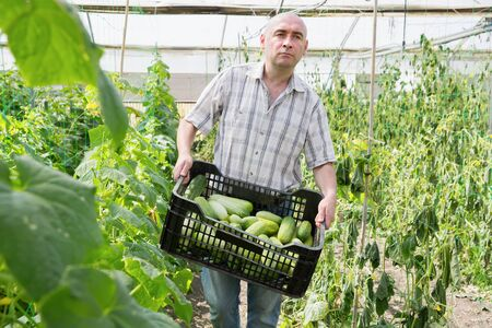 Portrait of  male farmer standing with crate of cucumbers in greenhouse Stockfoto