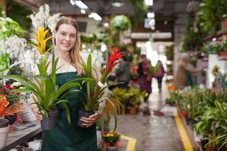 Positive woman picking a bromelia flower in the flower shop Stock Photo
