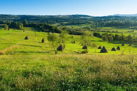 Picturesque lawns of Karpaty on Bucovina in Romania. Stockfoto
