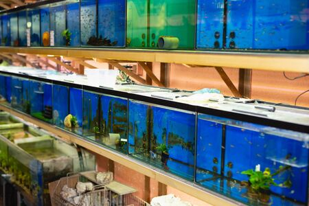 Interior of pet store with rows of fish tanks with colorful fish, plants and ground cover