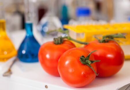 Ripe red tomatoes on background with lab test tubes and tools. Concept of quality control of agricultural products