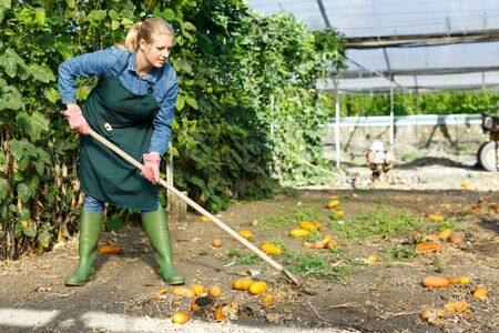Young female worker taking care of plants in glasshouse Stock Photo