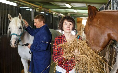 Couple of farmers feeding horses with hay at stable