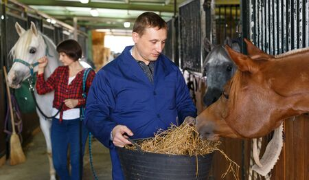 Male farm worker feeding horse with hay at stable Banco de Imagens