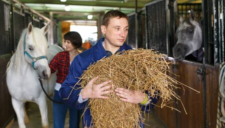 Positive male horse farm worker feeding horse with hay at stable Stock Photo