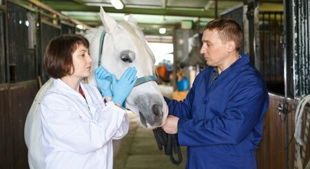 Female vet giving medical exam to horse in  stable