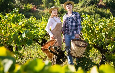 Two successful winemakers standing in vine rows with wicker baskets for harvest of grapes Stock Photo