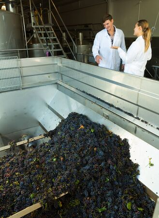 Confident male and female winemakers controlling sorting and crushing of grapes in mechanical destemmer at winery