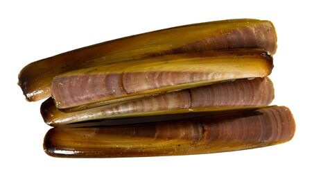 Seafood appetizer. Raw fresh molluscs razorshell (ensis) in shells. Isolated over white background Stock fotó