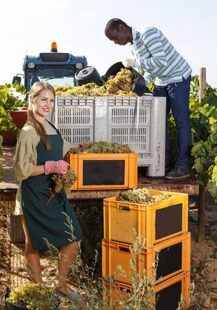 Man and smiling woman vineyard workers inspecting new grapes harvest in boxes