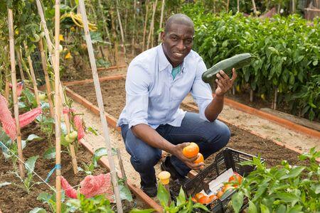 Young man gardener holding  harvest of fresh vegetables in  garden