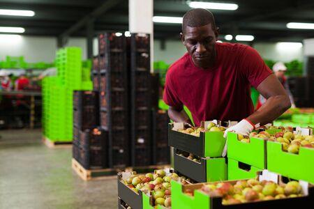 Portrait d'un ouvrier afro positif portant une boîte avec des poires récoltées en stockage dans un entrepôt de fruits