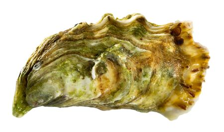 Image of tasty raw closed oysters, close-up. Isolated over white background Stock fotó