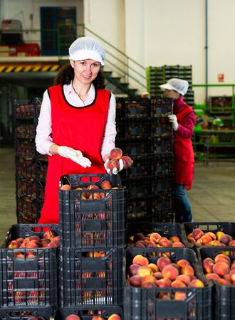 Two adult female workers sorting and packaging fresh peaches at factory