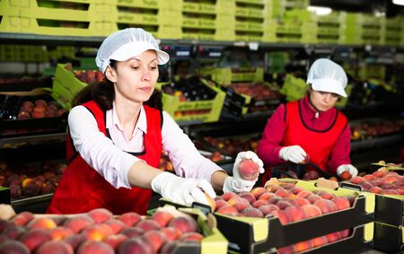 Two female fruit warehouse workers in process of sorting and packaging fresh peaches Stock Photo