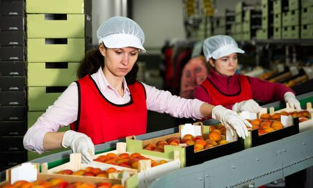 Two female fruit warehouse workers in process of sorting and packaging fresh apricots