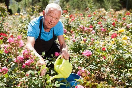 Portrait of senior man watering rose bushes at flowerbed in park