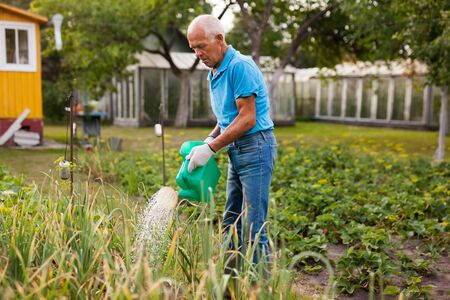 Senior farmer is watering vegetables in the garden