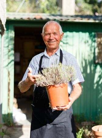 Smiling senior man tending and cultivating plants in homestead garden