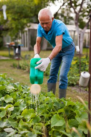 Senior farmer is watering vegetables in the garden