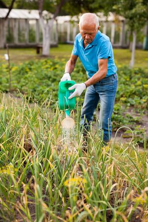 Mature farmer is watering vegetables in the garden bed