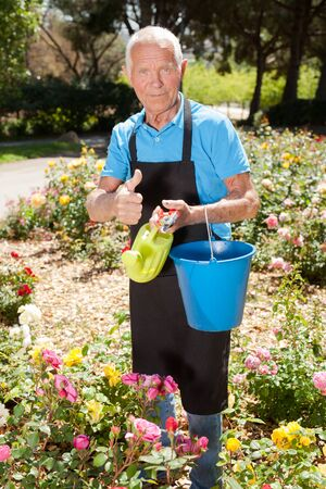 Senior male holding bucket and watering can and taking care of blooming roses at flowerbed