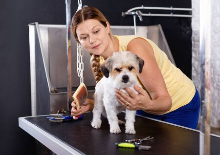 Cute havanese puppy getting treatments by smiling  female pet groomer in salon