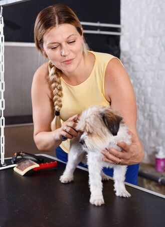 Cute havanese puppy getting treatments by smiling cheerful positive female pet groomer in salon