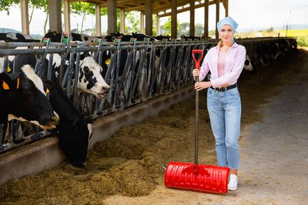 Confident young diligent positive cheerful smiling female owner of small dairy farm working in stall, feeding cows with hay