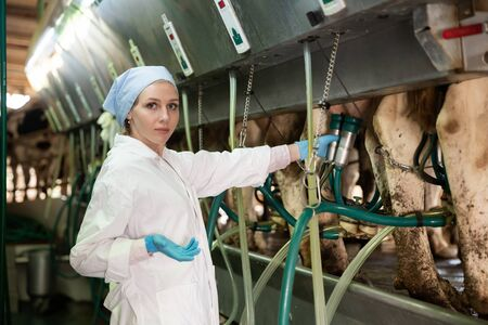 Portrait of skilled dairy-woman working in cowshed, preparing for machine milking of cows