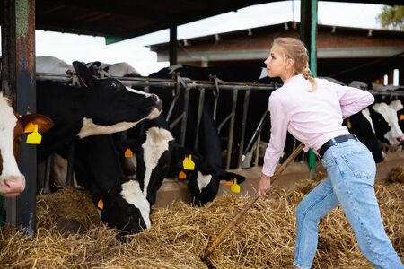 Confident young positive cheerful smiling female owner of small dairy farm working in stall, feeding cows with hay