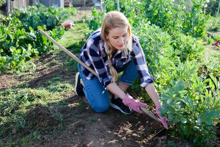 Young woman gardener with mattock working with beans seedlings in sunny garden outdoor