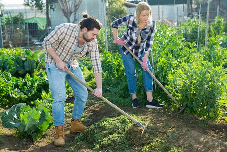 Portrait of young man and woman gardening with tools at farm
