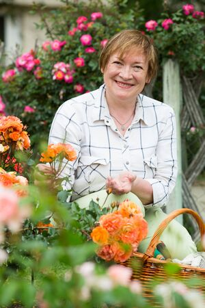 smiling senior woman gardener with horticultural tools working with roses in garden