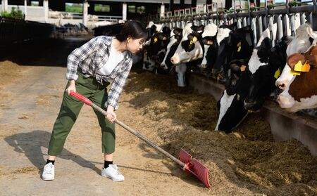 Young  cheerful positive smiling Chinese woman working on dairy farm, feeding cows with hay in stall outdoor Stock Photo