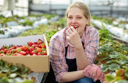 Positive woman greenhouse farmer gardening on plantation, harvesting strawberry