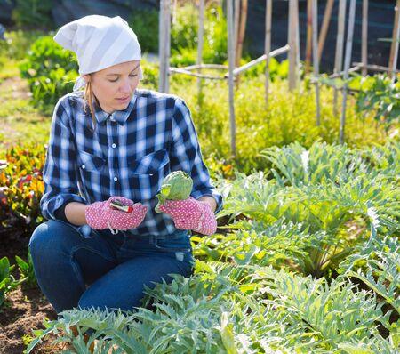 Girl farmer harvesting artichokes in the garden