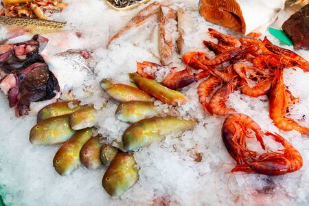Icy fish showcase with diversity of fresh marine products on seafood market