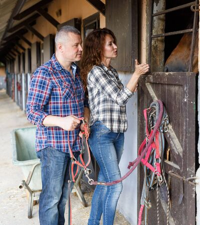Mature smiling couple with girth feeding a horse at stable outdoor Фото со стока