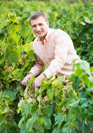 Young  smiling vintner checking wine grape and leaves in summer day Banco de Imagens