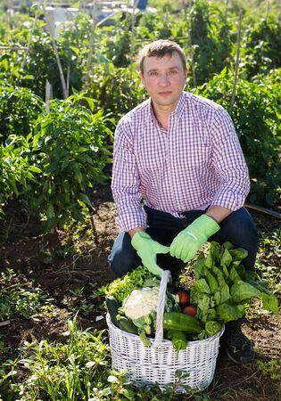 Man gardener holding basket with harvest of vegetables in garden outdoor