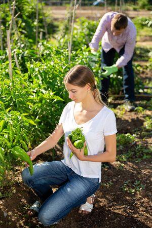 Family harvesting vegetables in the garden Banco de Imagens