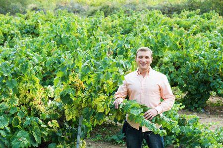 Positive smiling vintner checking wine grape and leaves in summer day Banco de Imagens