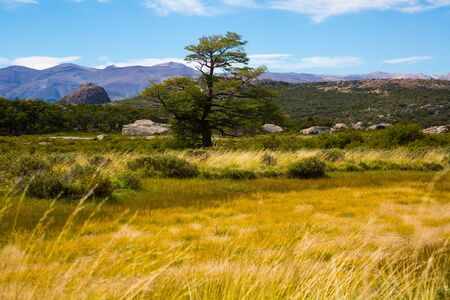Trees and vegetation on slopes of Andes mountains on sunny day. Patagonia, Argentina, South America
