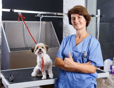 Portrait of elderly female groomer with havanese puppy at grooming salon
