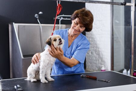 Portrait of caring elderly woman grooming cute havanese dog in professional pet salon