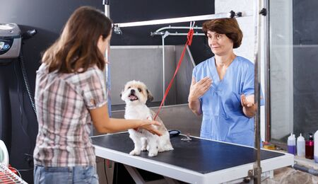 Portrait of elderly female groomer apologizing to woman client displeased with haircut of her puppy in pet salon