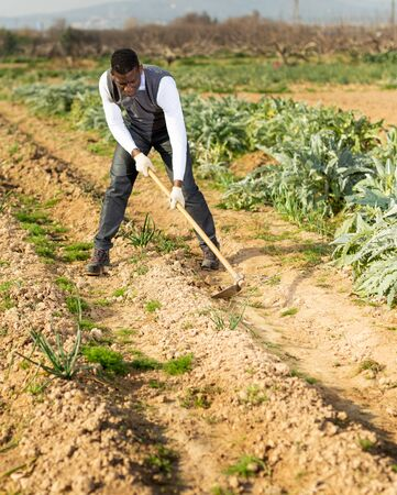 Focused African American working with hoe in vegetable garden, hoeing soil on onion rows
